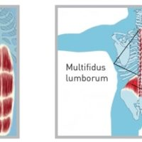 JOBA-Centrale-Muskler