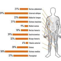 JOBA-Muskelaktivering